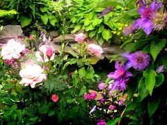 manu's garden (Manuela Pugliese) Tags: pink roses green nature pond purple magic secretgarden