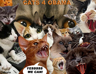 Cats For Obama