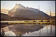 Rundle Reflection (dlynnphoto) Tags: canada mountains sunrise landscape geese jasper lakes canadian alberta banff rockymountains jaspernationalpark banffnationalpark vermillionlakes abigfave aplusphoto