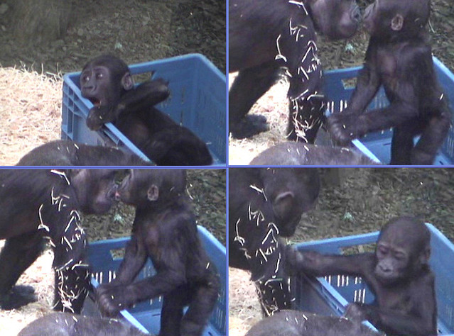 3-20-08 @ 8:30am Tatu plays with box by lily girl 00