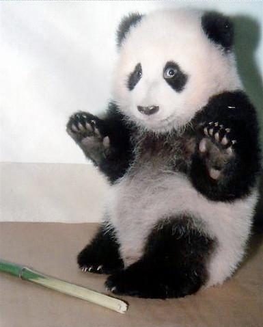 redonk_panda.jpg