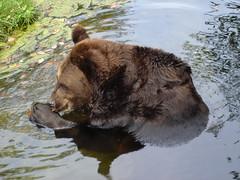 Bears at the Munich Zoo