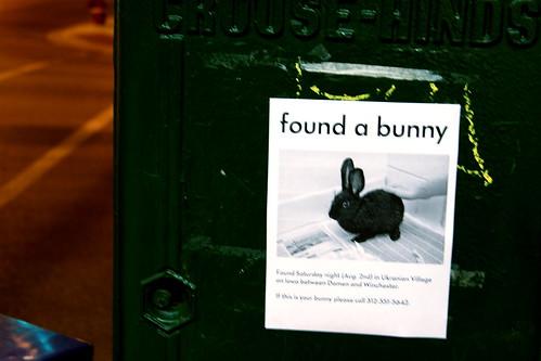 Found a bunny