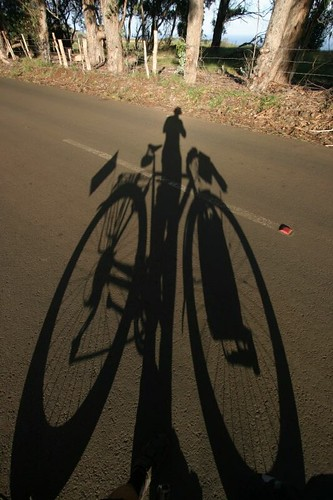 Rapa Nui Shadow