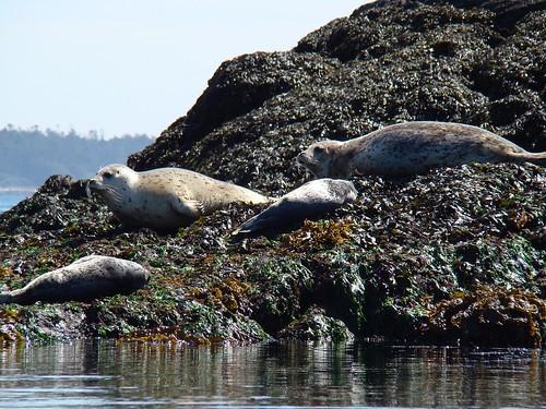 2008-08-03 Chain Islands 547