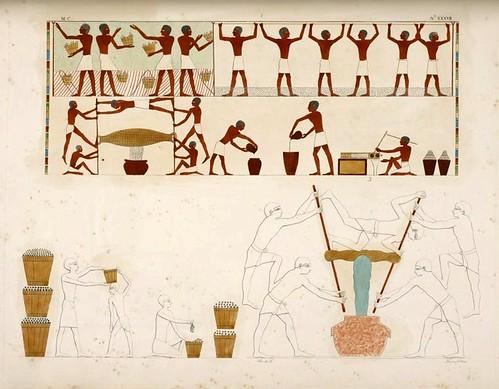 09- Vendimia y preparacion del vino