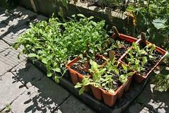 more fall seedlings