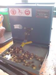 Nut cracking machine (jenhancock) Tags: australia florafauna