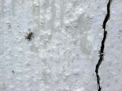 spider on the wall (*n3wjack's world in pixels) Tags: white macro spider spin natuur crack 2008 wit muur barst wallnature