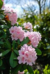 Blütenpracht (Makroworld) Tags: berlin deutschland natur pflanzen usertreffen blüten marzahn fotocommunity gärtenderwelt blten makroworld grtenderwelt
