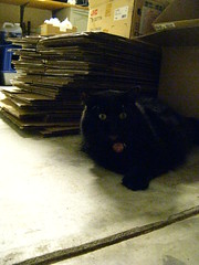 Huggy Bear next to the boxes that will be a cat fort