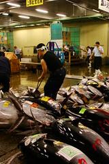 Últims peixos grossos