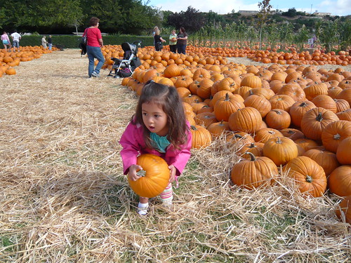 picking out a pumpkin