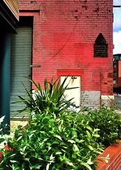 red wall (Harry Halibut) Tags: door old blue red plants green wall garage sheffield shutter allrightsreserved shorehamstreet rotrossorougerood colourbysoftwarelaziness sheff080910124 redsheff andrewpettigrew