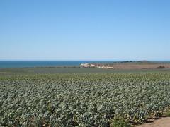Hwy1 (Artichoke field)