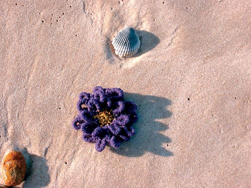 Crochet Bullion Stitch Flower
