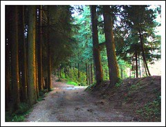 Way (Dreaming ...) Tags: tree green way murree mywinners theperfectphotographer colorsofpakistan
