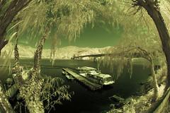 Kawaguchi-ko Bridge and Dock in Infrared (aeschylus18917) Tags: infrared japan yamanashi kawaguchilake nature bridge dock kawaguchiko nikon d70 danielruyle aeschylus18917 danruyle druyle 赤外線 ir landscape scenery surreal nikond70 sky tree ダニエルルール ダニエル ルール mountfuji 富士山 fujisan yamanashiprefecture 山梨県 yamanashiken lake mountain 日本 pxt