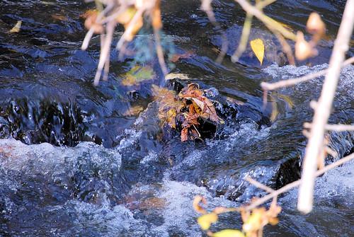 stream & Leaves Rochester MN