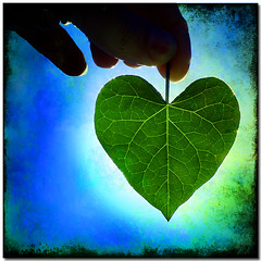 Your heart may stand in the sun... (Jamie Locke Art) Tags: sun texture stone fruit wonder leaf poetry peace seasons heart shell explore serenity grief kahlilgibran heartshapedleaf