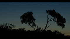 At night ([ Kane ]) Tags: moon tree night dusk australia brisbane moonrise qld bluehour kane gledhill 400d kanegledhill kanegledhillphotography