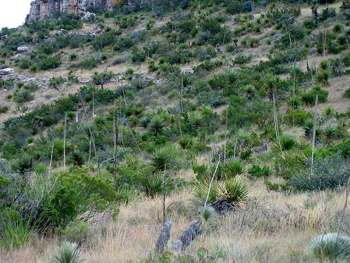walnut canyon deer
