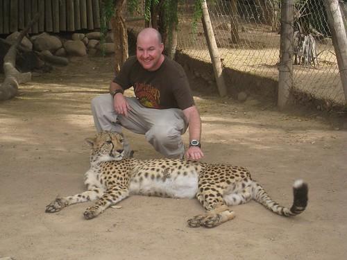 Petting the male cheetah