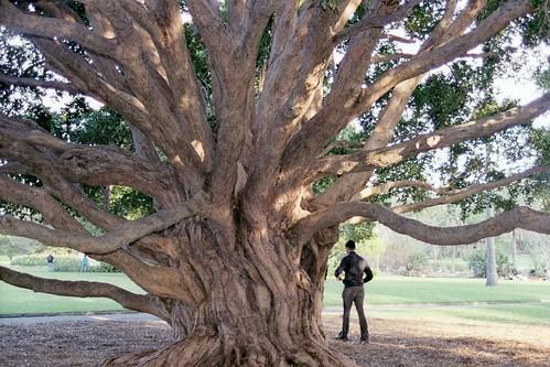 Botanic Gardens, Sydney, Australia