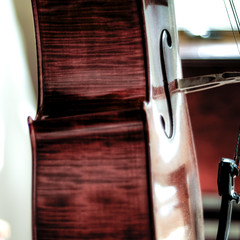 at attention (nosha) Tags: baby fall beauty 50mm nikon cello lee instrument classical pm 50 2008 fifty craftmanship 50mmf18 d300 violoncello nosha niftyfifty kiernoziak whlee stankiernoziak