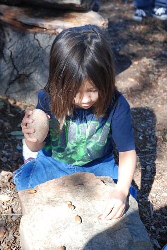 Livie crushing acorns