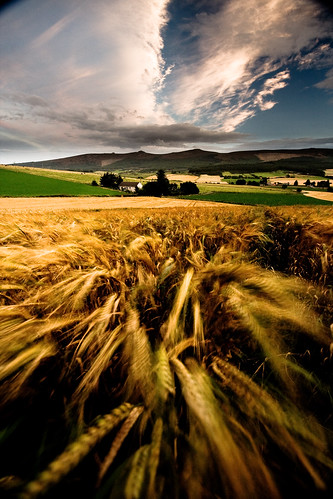 Barley & Bennachie