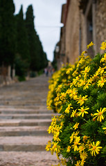 Bokeh On Calvary (Philipp Klinger Photography) Tags: flowers trees houses sky house mountain tree church yellow rock stone stairs spain europa europe catholic dof bokeh hill mount espana cypress mallorca philipp cypresses spanien calvary espanya pollenca klinger sigma30mmf14 hbw dcdead