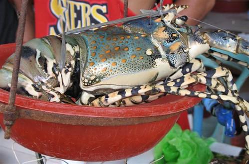 2.5 kilo lobster