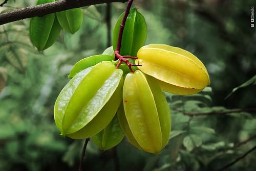 Starfruit. Star Fruit. Carambola. by DeusXFlorida (9,505,955 views) - thanks guys!, on Flickr