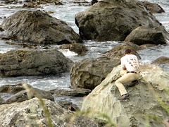 A man on the rocks taking photos of seals near Kaikoura, New Zealand