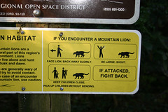 Mountain lion vs stick figures (shollingsworth) Tags: mountain animal sign yellow danger cat warning attack lion stick figures hollingsworth