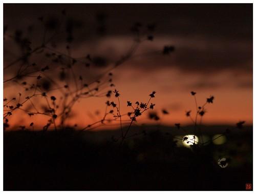 Sunset 081201 #01