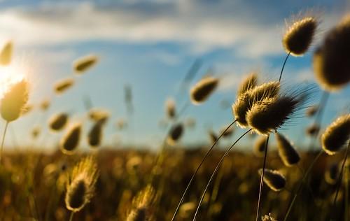 Bokeh Fields by Vermin Inc, on Flickr