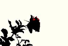 Une rose pour vous (Fo@d,) Tags: rose به گل زهرا دوستان گُل همه تقدیم رُز