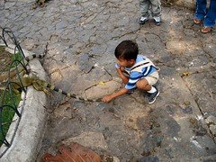Iguanas don't mind children pulling their tails