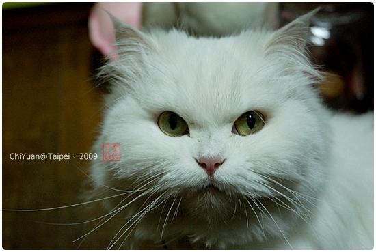 [叮叮]Cat。圓圓臉