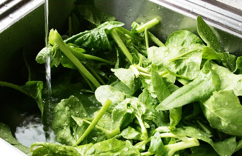 rinsing freshly picked spinach