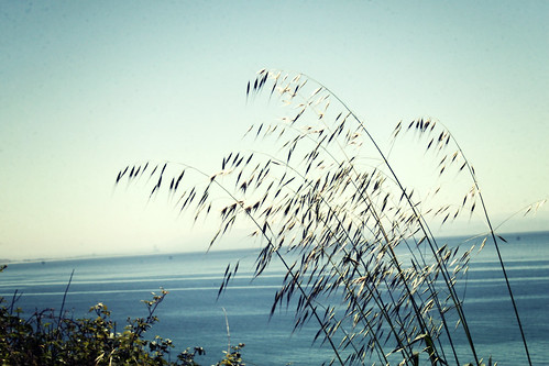 oceangrasses