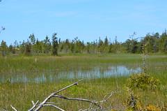 Sandbanks Provincial Park (Go_OffStation) Tags: ontario sand dunes sandbanks sanddunes naturetrail sandbanksprovincialpark panne provincialparks ontarioparks sandbankspark