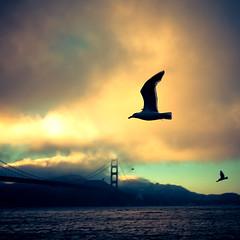 just keep flying (Luis Montemayor) Tags: sanfrancisco trip viaje bridge sea sky bird water clouds puente mar flying agua ave cielo goldengate nubes myfavs volando