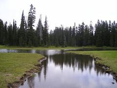 PCT Hike Hwy 12 northward