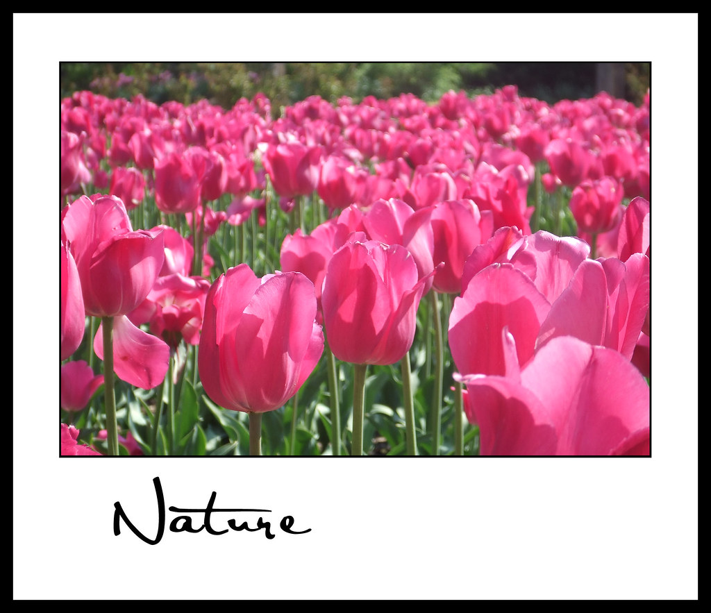 Nature_Stephanie A 02