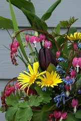Happy Sunday Morning Bouquet (jacki-dee) Tags: pink flowers blue yellow oregon garden spring panda aquilegia tulip vase bleedingheart forgetmenot bouquet corydalis flexuosa tulipa dicentra leopardsbane solomonsseal blacktulip dicentraspectabilis bluepanda doronicum corydalisflexuosa irisfoliage columbinefoliage corydalisflexuosabluepanda