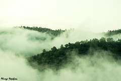Abr Jungle, A piece of paradise!-2 (alirezanajafian) Tags: cloud nature fog clouds forest amazing nikon iran jungle mysterious dreamy cloudforest alireza semnan abr irannature   najafian  shahrood d80  mywinners  forestofclouds   cloudjungle shahroud  nikkor1855mmed shaahroud shaahrood abrjungle abrforest jungleofclouds   jungleofcloud forestofcloud