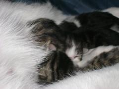 kittens!!! 011